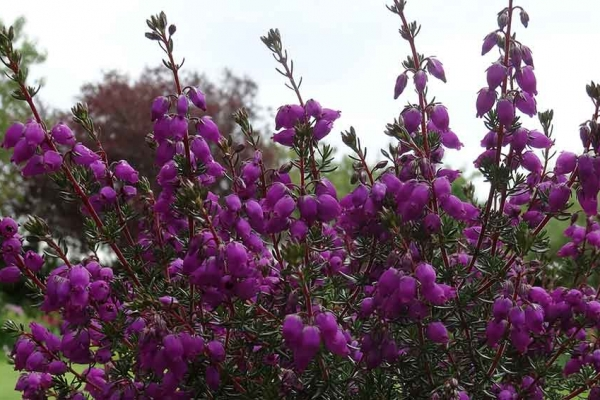 purple1BA08F2B-4DD5-5785-93F4-EBB6068B7AB2.jpg